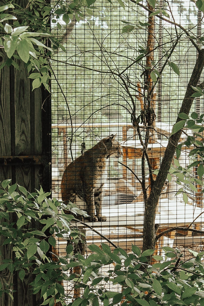 The Animals of the World Exhibit is place to visit while in Frisco, Texas.