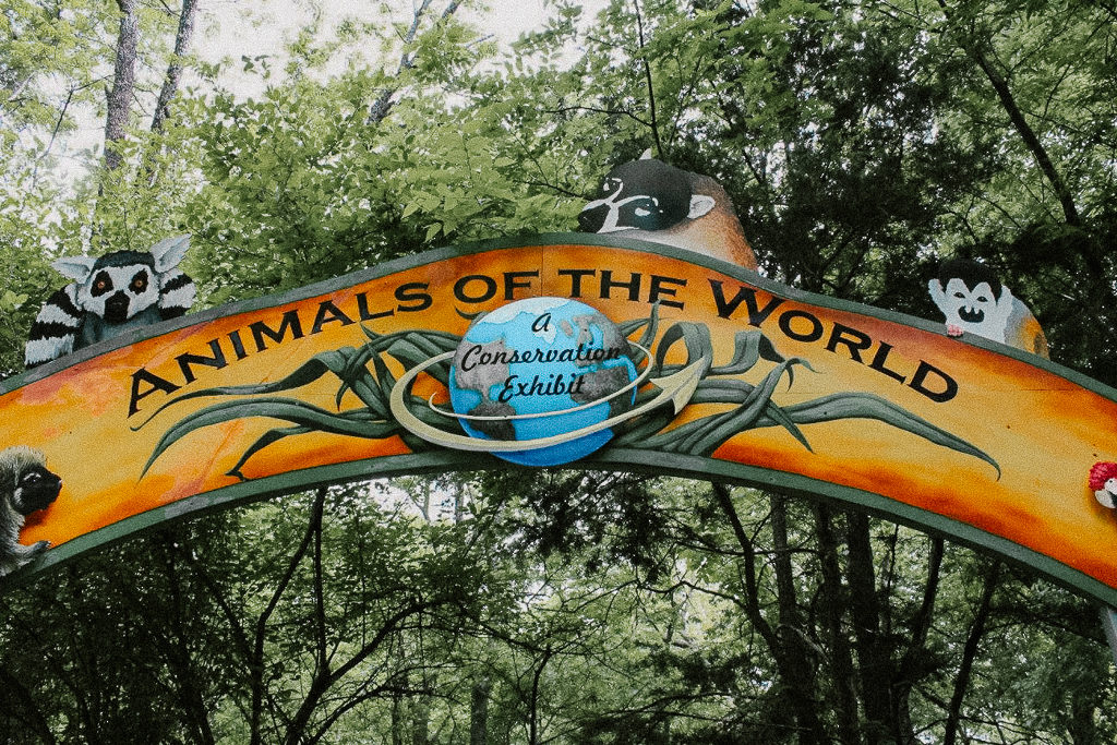 The Animals of the World Exhibit needs to be on your places to visit in Frisco, Texas with children!