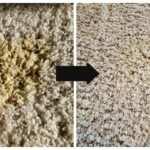 How to Remove Old and New Carpet Pet Stains